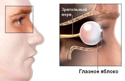 Зрительный нерв и глазное яблоко